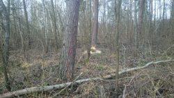Barbara Majewska - Bobry w lesie