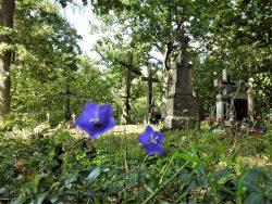Jakub Sakowicz - Cmentarz prawosławny w Wyrykach-Adampolu (2)