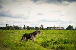 Monika Adamczyk - Pies na tle wsi Wyryki fotografowanej od strony pól