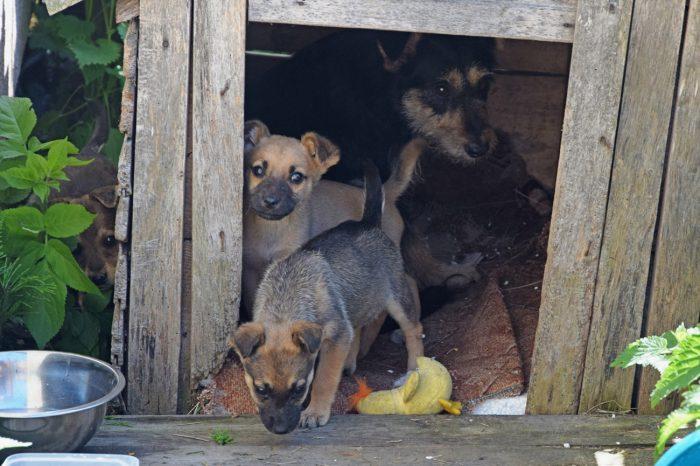 Zdjęcie przedstawia 3 szczeniaki oraz ich matkę.