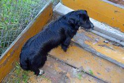 Zdjęcie przedstawia znalezionego psa