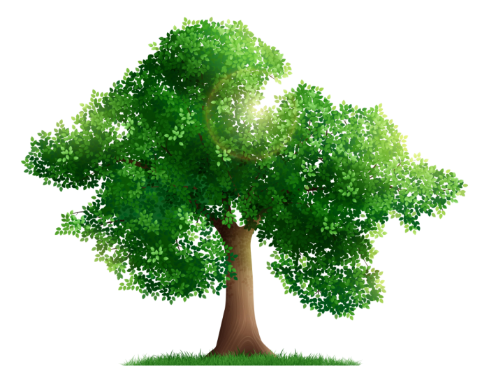 Ilustracja przedstawia drzewo
